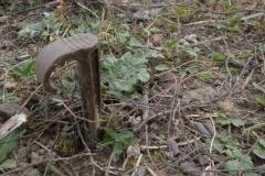Une pousse de rhubarbe = un crampillon